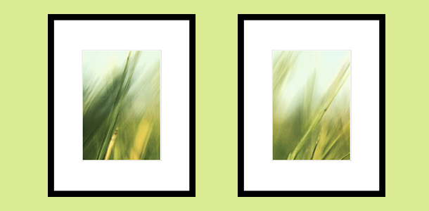 2grass_ for_gallery2